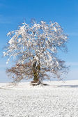 Nice winter landscape with tree and blue sky — Stock Photo