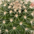 Stock Photo: Quills and prickly cactus spines