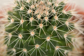Quills and prickly cactus spines — Stock Photo