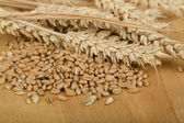 Pile of organic whole grain wheat kernels and ears — Stockfoto