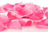 Pink rose petals on white — Stock Photo