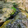 Falls on the small mountain river in a wood — Stock Photo #43192557