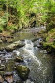 Mountain creek doubrava — Stock Photo