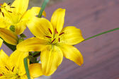 Detail of flowering yellow lily — Stock Photo
