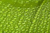 Water drops on green plant leaf  — Stock Photo