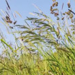 Field of grass with blowing wind with very shallow focus — Stock Video #47536259