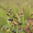 Field of grass with blowing wind with very shallow focus — Stock Video #47536303