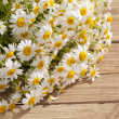 Camomile flower on wood — Stock Photo