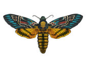Colorful death head moth — 图库照片