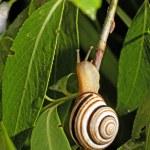 Tiny Snail — Stock Photo #3197231