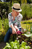 Young woman harvesting some beetroots — Stock Photo