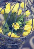 Gelbe Tulpen — Stockfoto