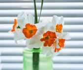 Narcissus — Stock Photo