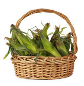 Corncobs in a wiker basket — Stock Photo
