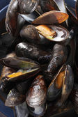 Closeup on fresh mussels — Stock Photo