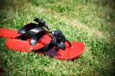 žabky — Stock fotografie