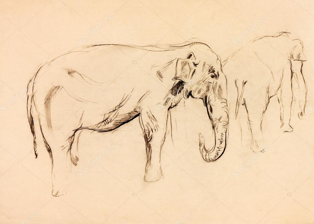 Old,grunge original pastel and  hand drawn, working  sketch of a elephant.Free composition — Stock Photo #12907163
