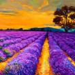 Lavender fields - Stock Photo