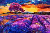 Lavender fields — Stock Photo