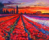 Poppy fields — Stock Photo