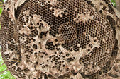 Wasp nest texture background — Stock Photo