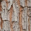 Tree texture — Stock Photo