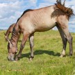 Horses on a summer pasture — Stock Photo #12078319