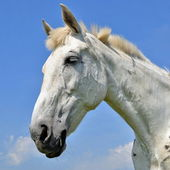 Head of a horse against the sky — Stockfoto