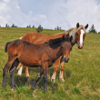 Horses on a summer pasture — Stock Photo #12180768
