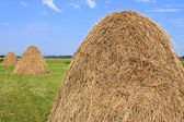 Hay in stacks — Stock Photo