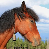 Head of a horse against the sky — Stock Photo