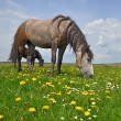 Horses on a summer pasture — Stock Photo #13153361