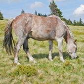 Pferd auf einer sommer-weide — Stockfoto