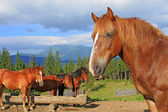 Yaz dağı mera üzerinde atlar — Stok fotoğraf