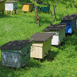 Stock Photo: Apiary on slope