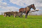 Cheval avec un chariot — Photo