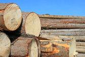 木准备 — Stockfoto