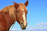 Head of a horse against the sky. — Stock Photo