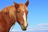 Testa di un cavallo contro il cielo. — Foto Stock