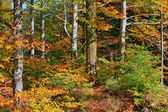 Herbst in holz — Stockfoto