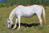 Koně na letní pastviny — Stock fotografie
