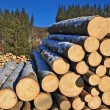 Stockfoto: Wood preparation