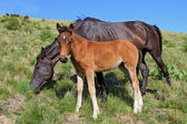 Foal on a summer pasture — Foto de Stock