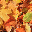 Autumn background from leaves — Stock Photo