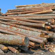 Stock Photo: Wood preparation