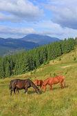 лошади на летние пастбища — Стоковое фото