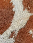 Fragment of a skin of a cow — Stock Photo
