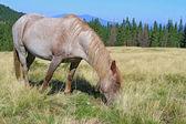夏の山の牧草地の馬 — ストック写真