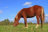 Häst på en fäbod — Stockfoto