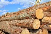Holz-Vorbereitung — Stockfoto
